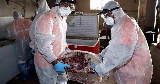 Yakalanan 5 ton kaçak domuz eti imha edildi