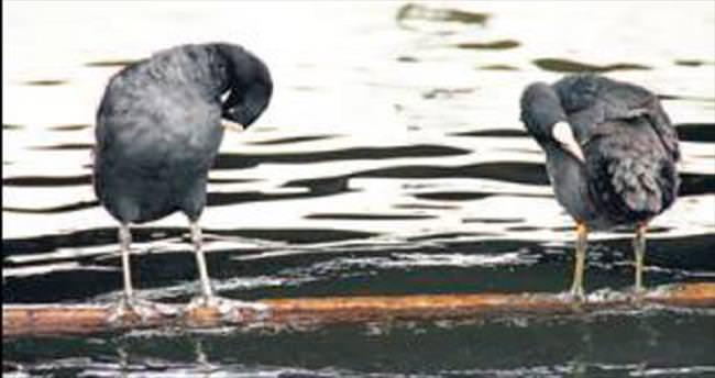 Kuş cenneti Mogan ilgi odağında