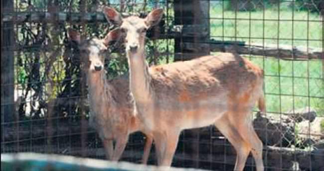 Kaçak hayvanlar için klinik açtı
