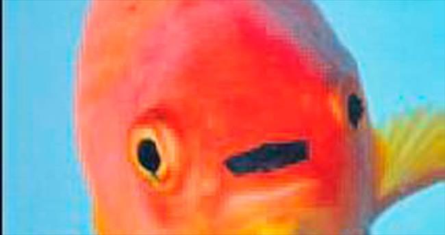 Hitler balığı internet fenomeni