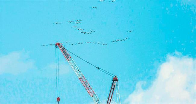 Üçüncü köprüde kuş göçüne özel çalışma