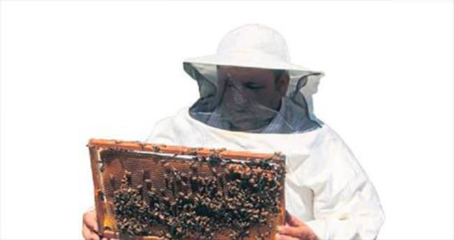 Arılar 2 bin 500 rakımda bal yapıyor