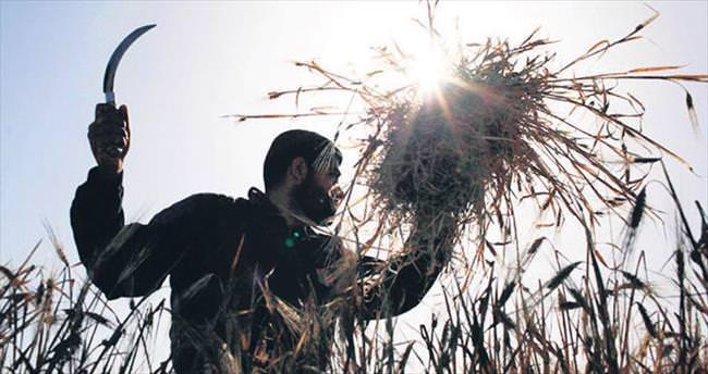 Gazzeli çiftçinin de yüzü gülecek artık