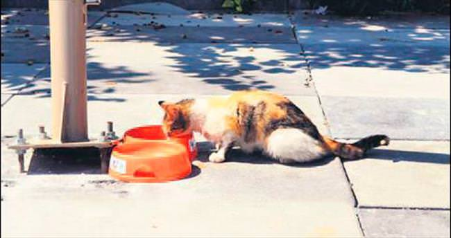 Sokak hayvanları için seferberlik