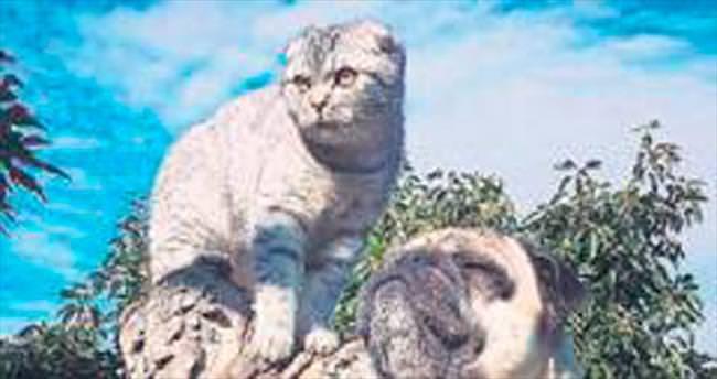 Kedi ile köpeğin örnek dostluğu