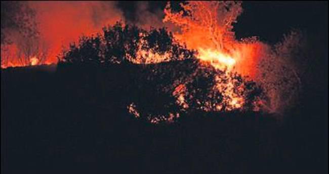 Aliağa ve Tire'de orman yangınları