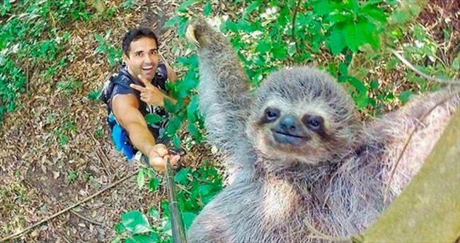 Tembel hayvanla ilk selfie!