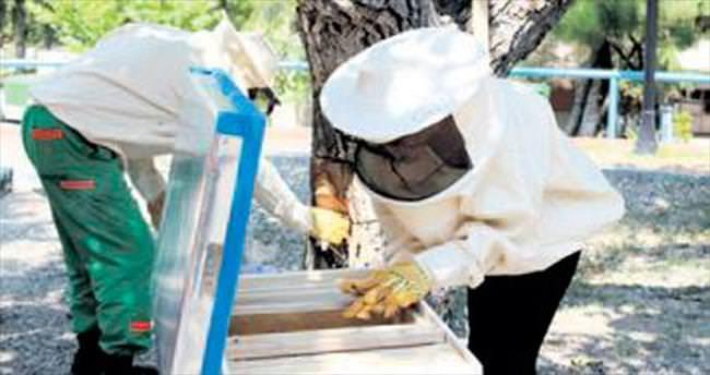 Protokol arılar yeni yuvalarına taşındı