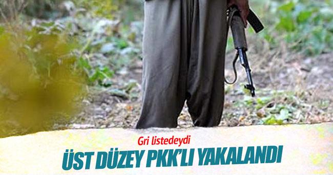 Üst düzey PKK'lı İstanbul'da yakalandı!