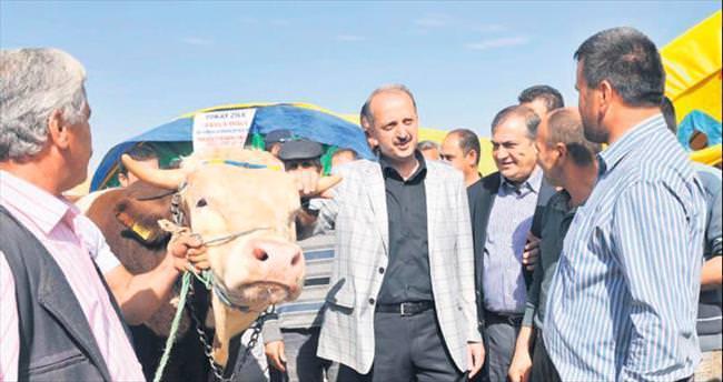Ortaköy'de bu yıl kurban için 360 çadır kurulacak