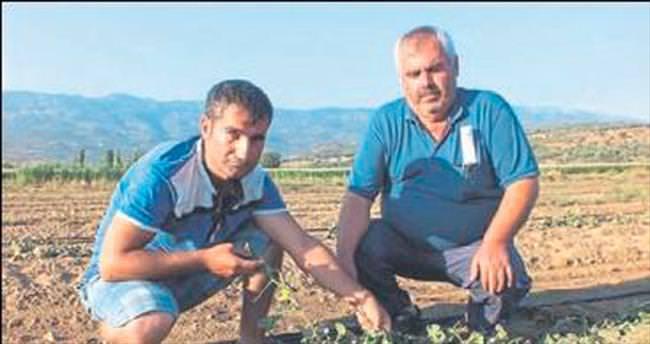 Kiraz'da tarlaları dolu yağışı vurdu