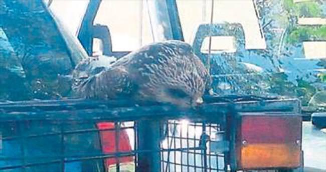 Kaçak av yapana 7 bin 850 TL ceza
