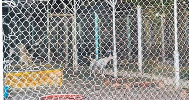 Ayvalık'ta 'pitbull' saldırısı