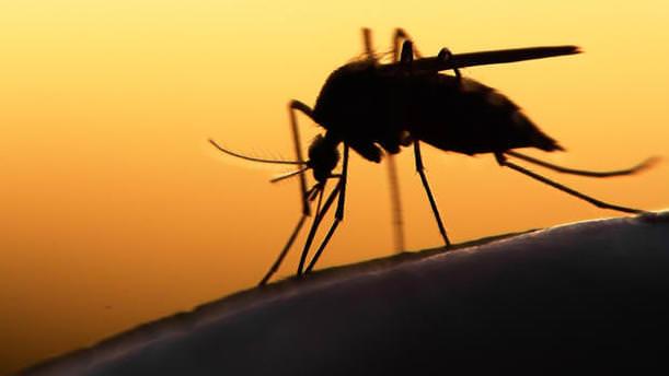 ABD'de Zika ile mücadele