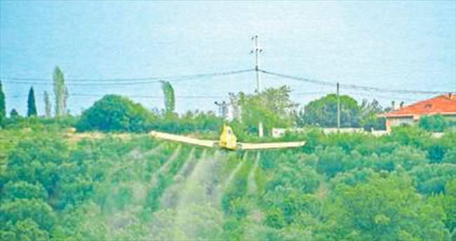 Zeytin sineği ile havadan mücadele