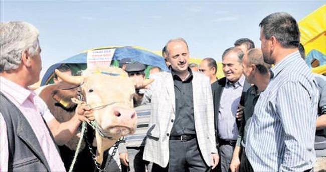 Kurbanlıklar Mamak Ortaköy'de yerini aldı