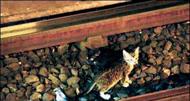 Treni durdurdu kediyi kurtardı