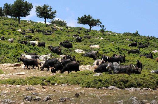 Bitlis'te hayvan otlatma kavgası: 2 ölü, 4 yaralı