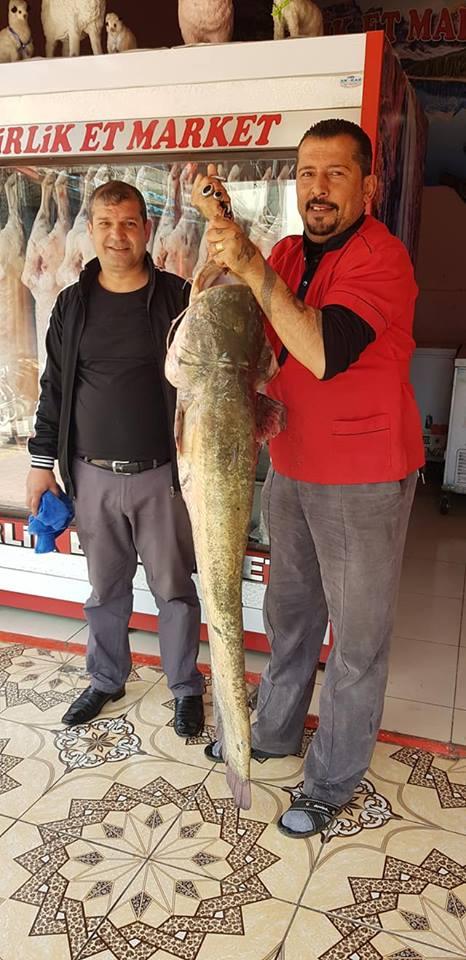 Kartalkaya Baraj gölünde avlanan kasap oltayla 45 kiloluk yayın balığı