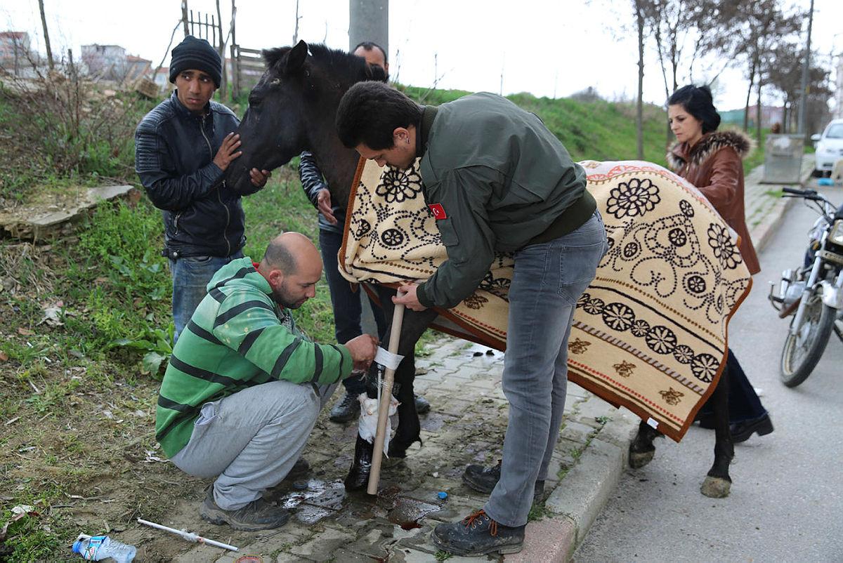 Ayağı kırılan atı iyileştirmek için seferber oldular