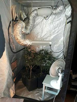 Uyuşturucu üretmek için evini seraya çevirdi