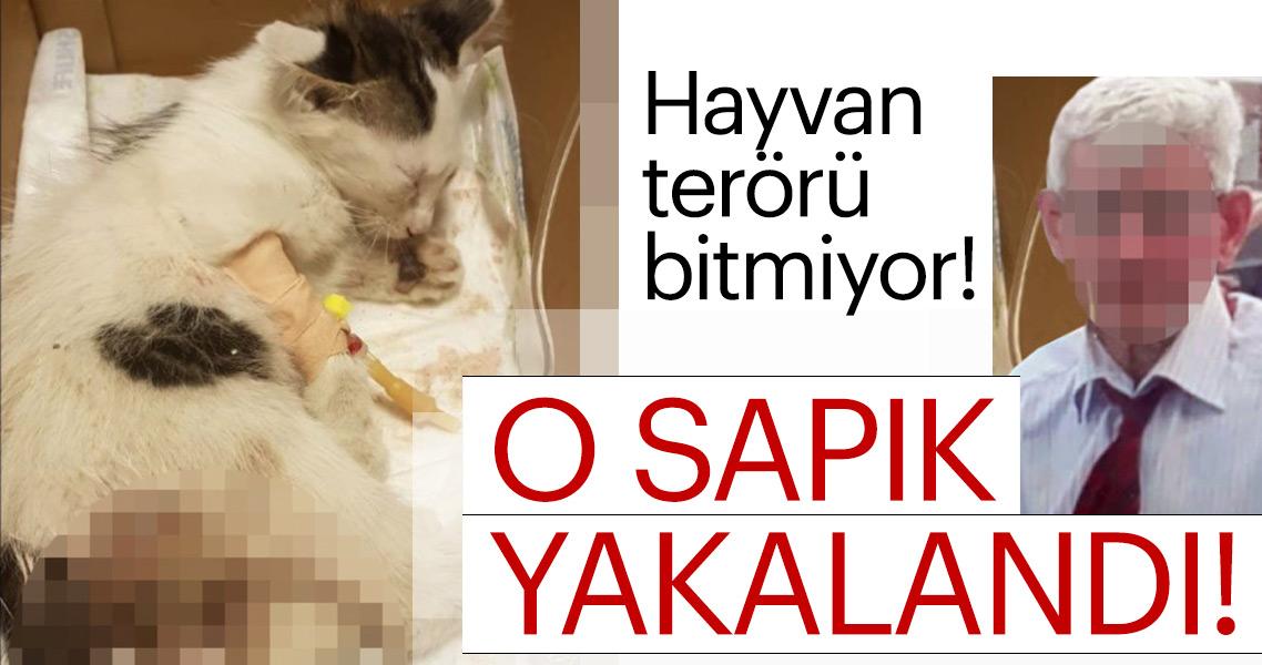 Son dakika... Yavru kediye tecavüz eden sapık yakalandı