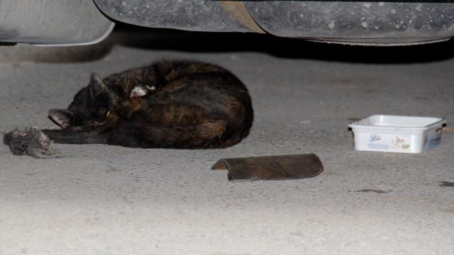 Kayseri polisinden 'kedi' açıklaması