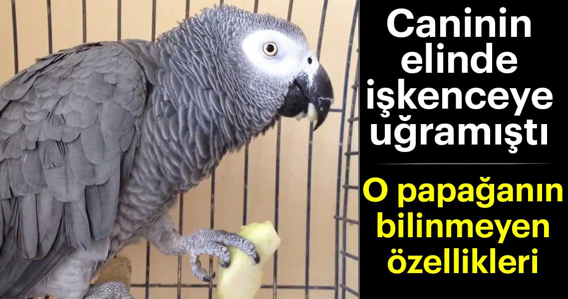 Murat Özdemir'in elinde işkenceye uğran papağanın bilinmeyen özellikleri