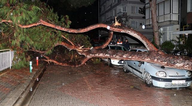 Yerinden sökülen ağaç otomobilin üzerine devrildi