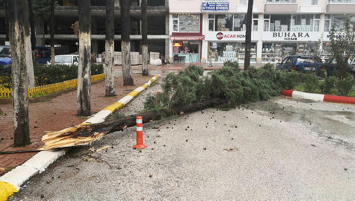 Bucak'ta fırtına ağacı devirdi