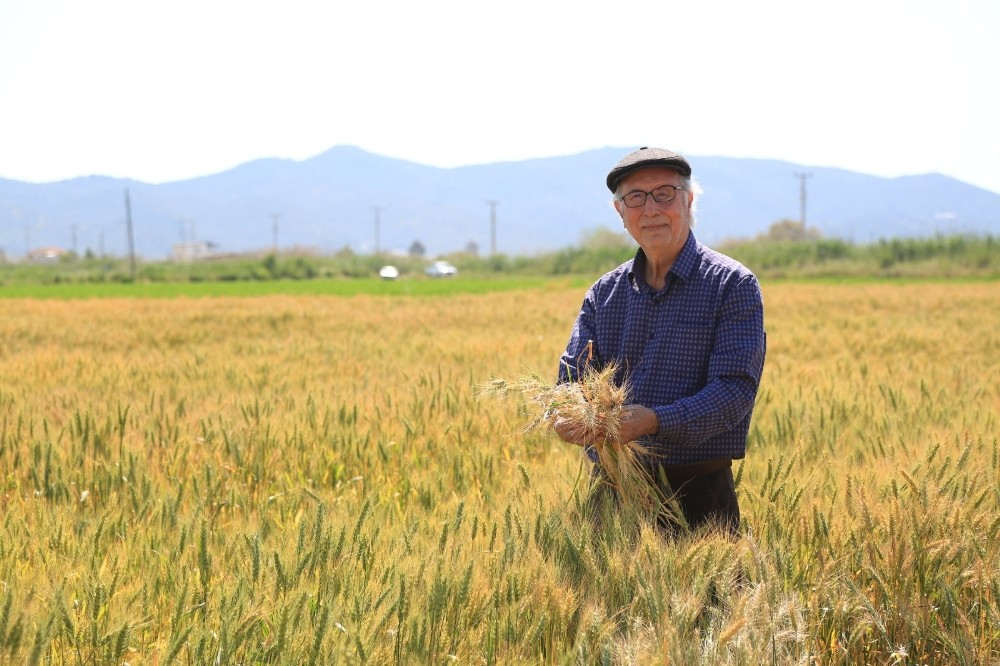 TMO, Milas'ta buğday ve arpa alımına başladı