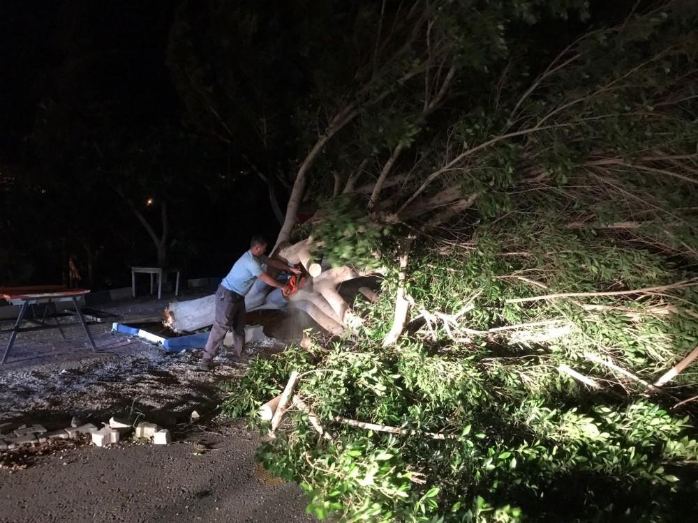 Antalya'da fırtına ağaçları kökünden söktü, elektrik direklerini yıktı