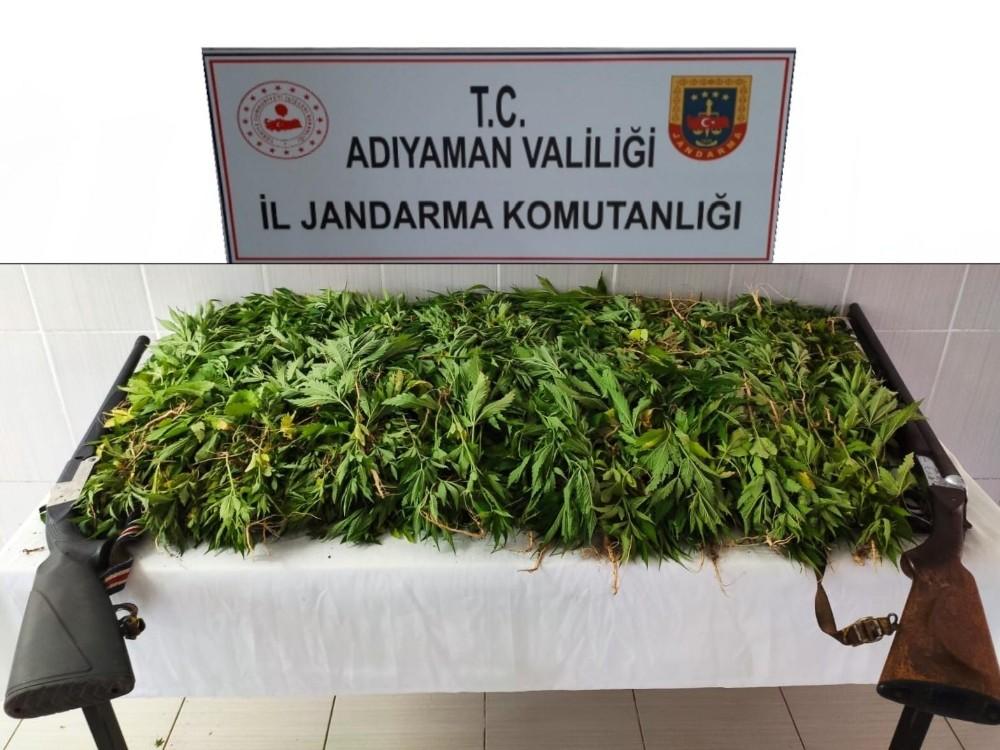 Jandarma kenevir bitkisi ele geçirdi