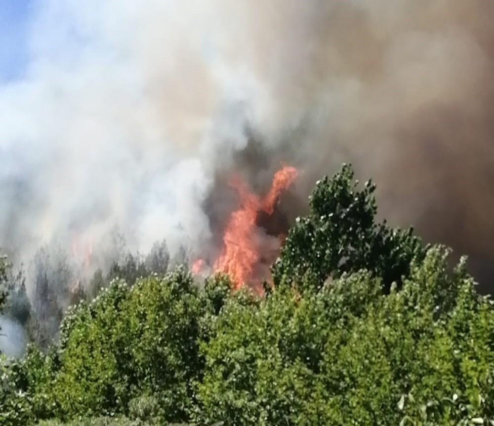 Kahramanmaraş'ta 1 hektar alan zarar gördü