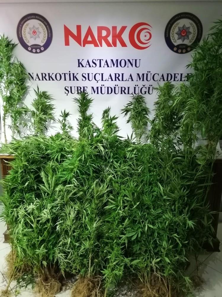 Kastamonu'da 136 kök kenevir ele geçirildi
