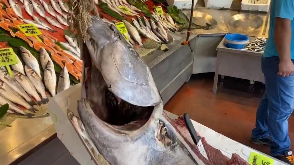 Yeni sezonun ilk balıkları tezgahlarda