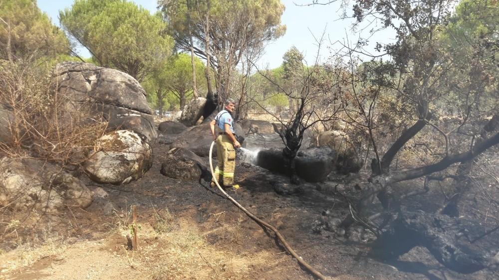 Ayvalık'ta ormanlık alanda örtü yangını