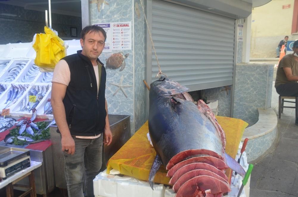 320 kiloluk dev orkinos görenleri şaşkına çevirdi - Bilecik Haberleri