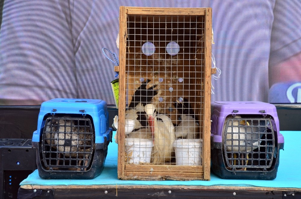 İstanbul'da rehabilitasyon süreci tamamlanan leylek ve martılar doğaya salındı