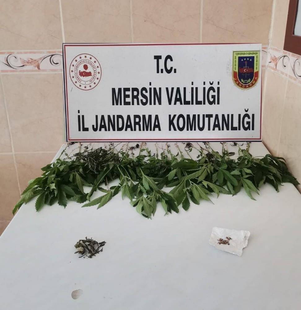 Mersin'de bir evde 31 kök kenevir bitkisi ele geçirildi