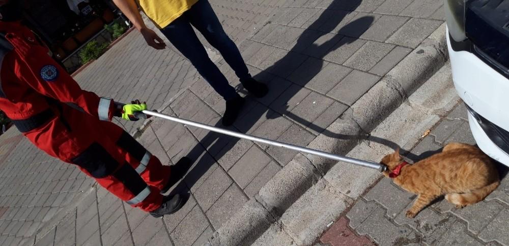 Fethiye'de otomobilin motoruna sıkışan kediyi itfaiye kurtardı