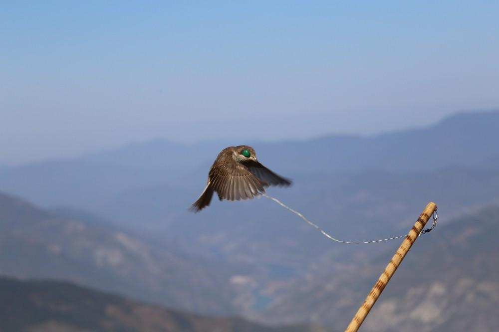 Sezonun son atmaca avı 2 bin 200 rakımlı Genya dağında yapıldı