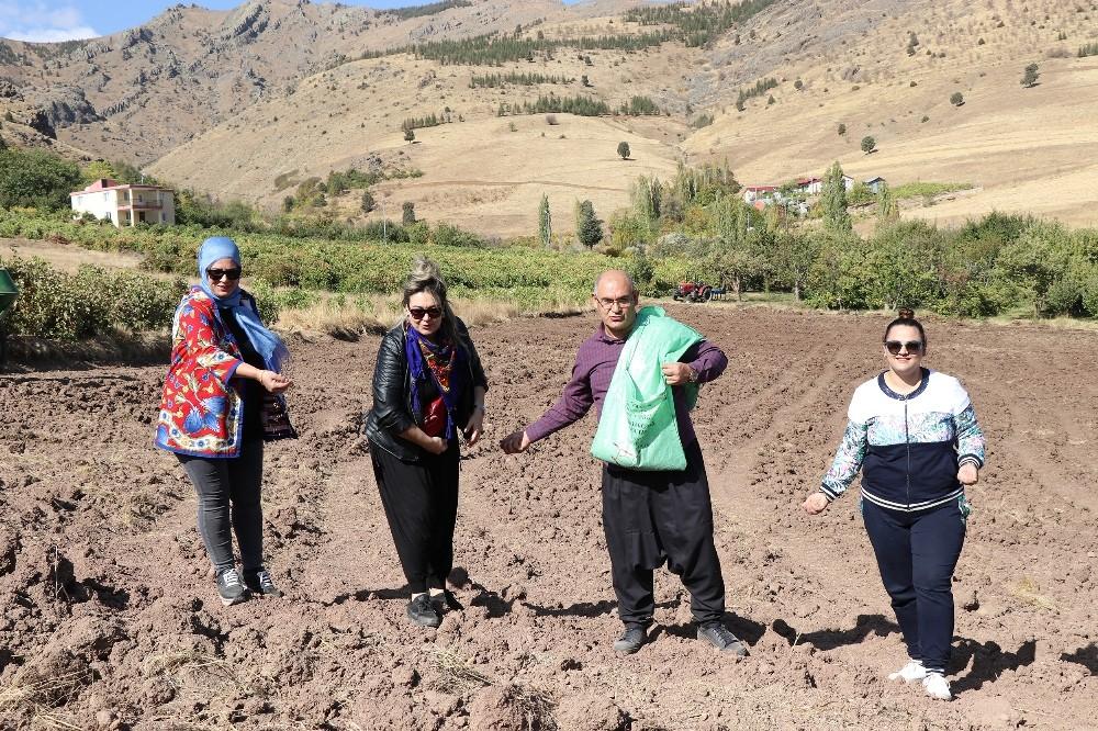 Başkan şalvarını giyip belediye arazisine karakılçık buğdayı ekti