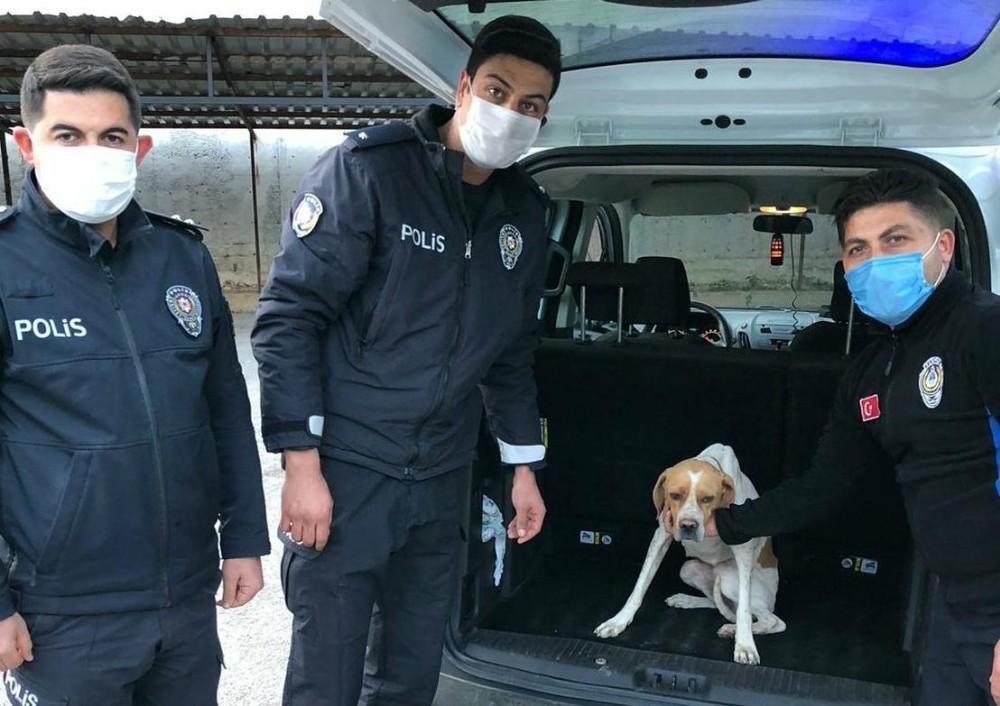 Köpeğe işkence görüntüleriyle ilgili 1 gözaltı