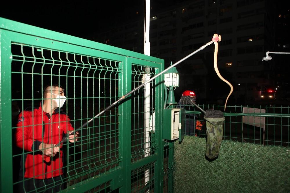 Siteye giren yılan itfaiye ekiplerince yakalandı