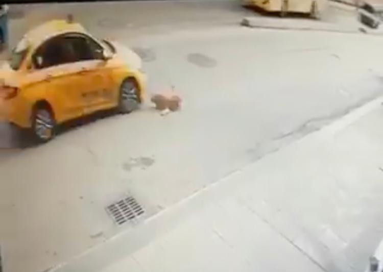 Özel Pendik'te köpeğe çarpan taksici kaçtı