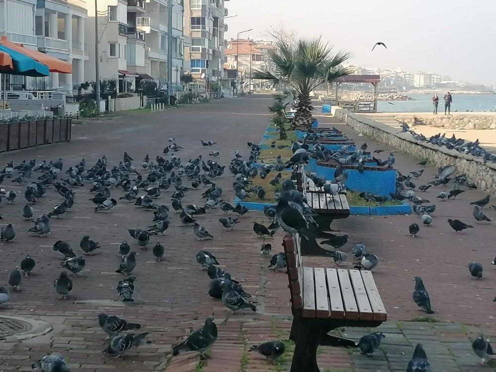 Denizin ve güneşin tadını kuşlar çıkardı
