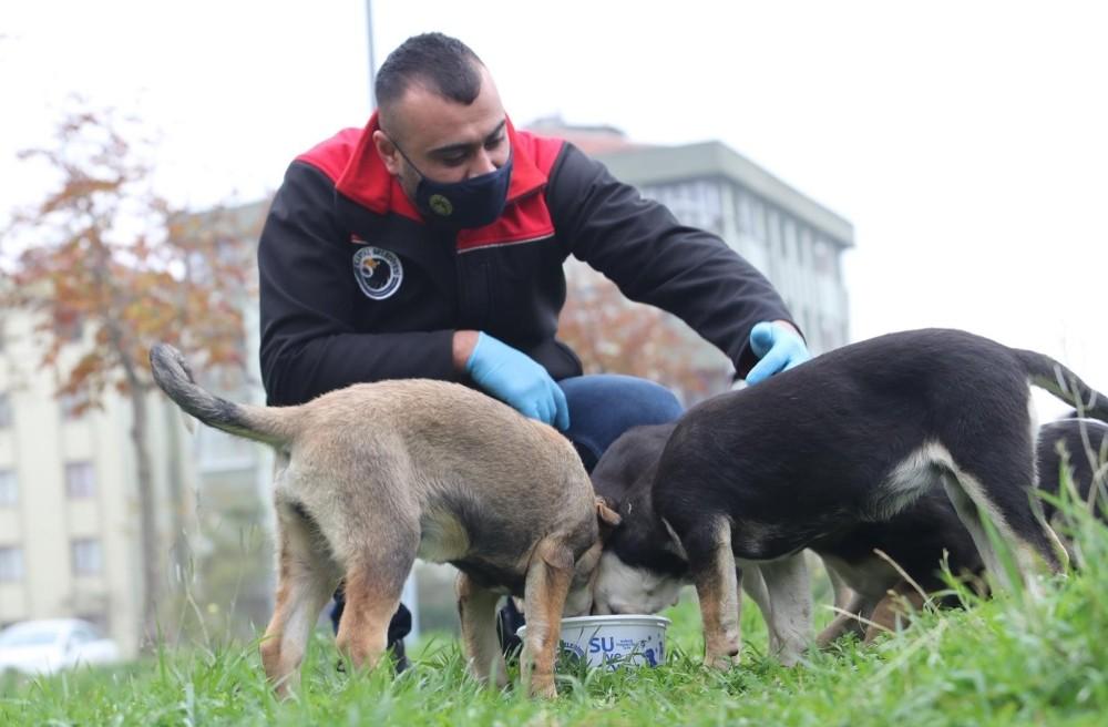 Kartal Belediyesi sokağa çıkma yasağında da sokak hayvanlarının yanında