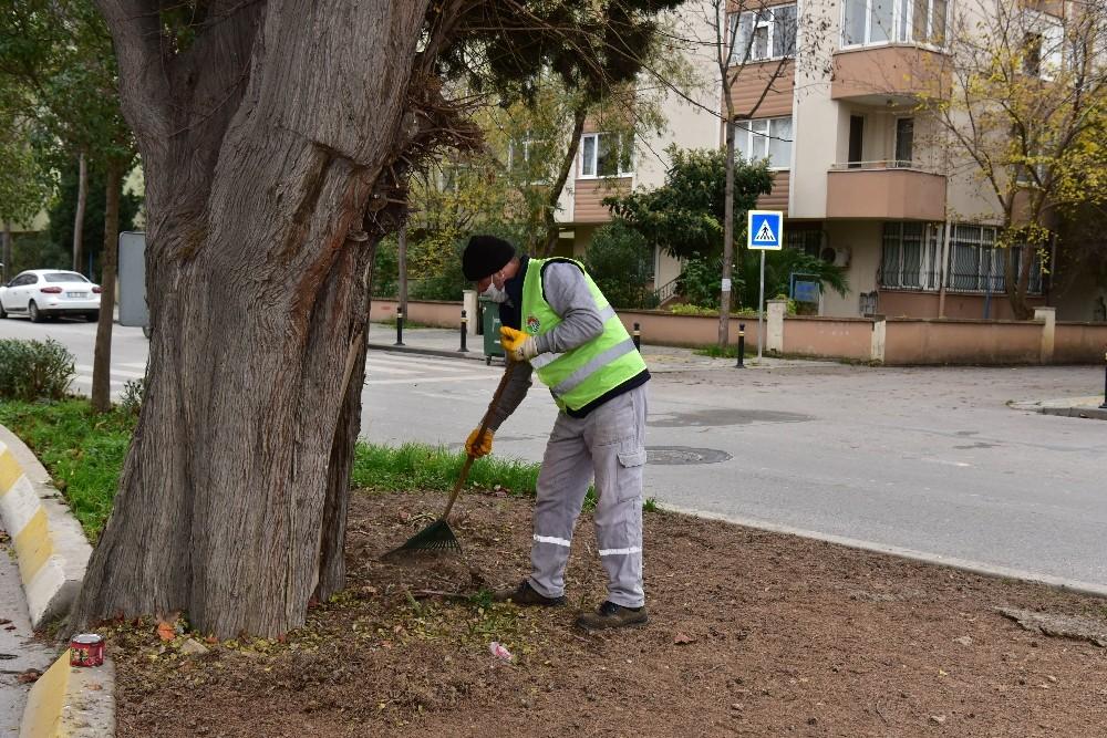 Tuzla'da 600 yıllık ağaç, dut ağacına ve arılara ev sahipliği yapıyor