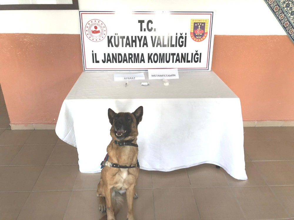 Narkotik köpeği Mola göz açtırmadı